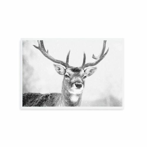 TAFELGUT / Pohľadnica Deer