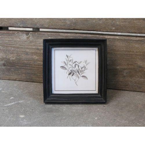 Chic Antique / Botanický obrázok v rámčeku Black 16x16 cm