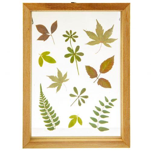sass & belle / Drevený rámček Herbarium Floating Leaves