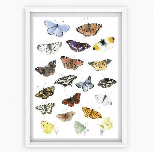 MANKAI Paper / Plagát Denné Motýle A3