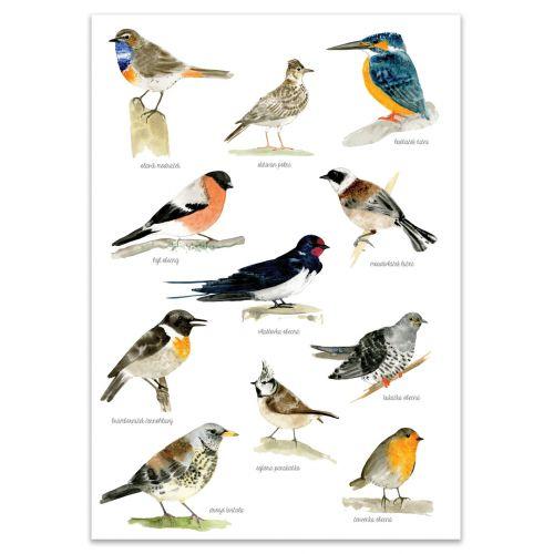 MANKAI Paper / Plagát s vtáčikmi A4 Bird Songs