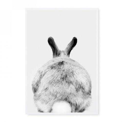 TAFELGUT / Pohľadnica Rabbit
