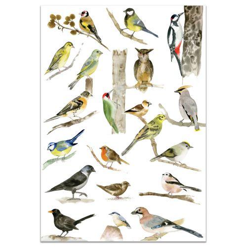 MANKAI Paper / Plagát s vtáčikmi A3 Birds