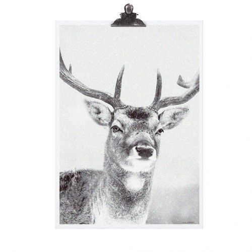 TAFELGUT / Plagát Deer 30x42 cm