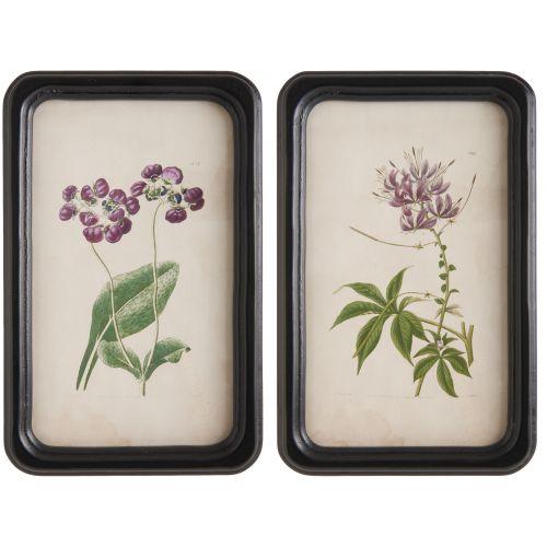 IB LAURSEN / Botanický obrázok v rámčeku Flower