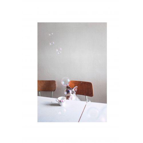 Fine Little Day / Obrázok s mačkou Hiro