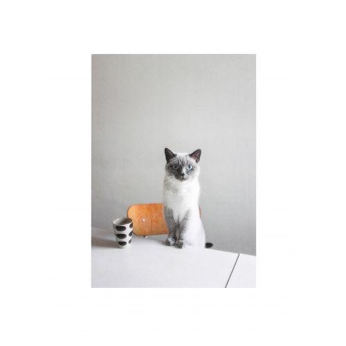 Fine Little Day / Obrázok s mačkou Siri