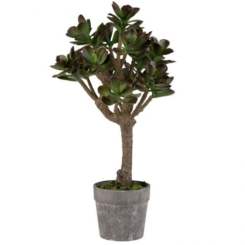 CÔTÉ TABLE / Dekoratívny tučnolist Plante Kalanchoe