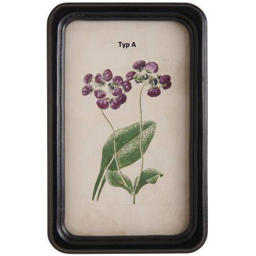 Botanický obrázek v rámečku Flower