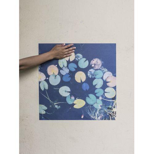 Plakát Water lilies 50x50 cm