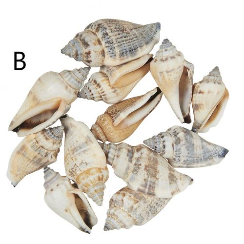 Dekorativní mušličky – 4 druhy