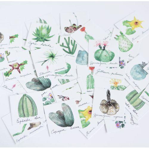 Papírové pexeso Verdant Succulents
