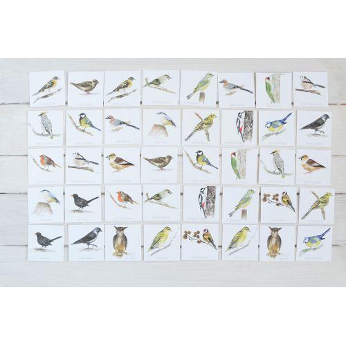 Papírové pexeso Ptáčci z našich krmítek