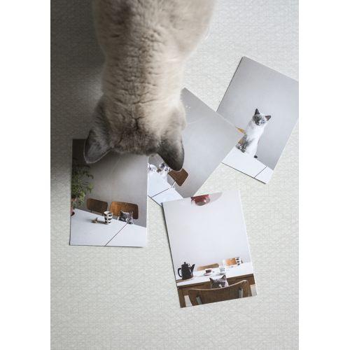 Obrázek s kočkou Rut