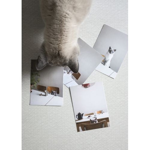 Obrázek s kočkou Hiro