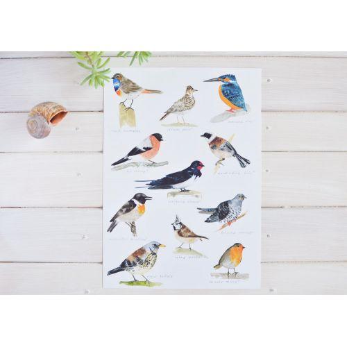Plakát s ptáčky A4 Bird Songs