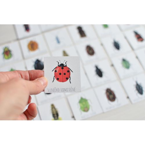 Papírové pexeso Beetles