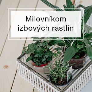 Pre milovníkov izbových rastlín