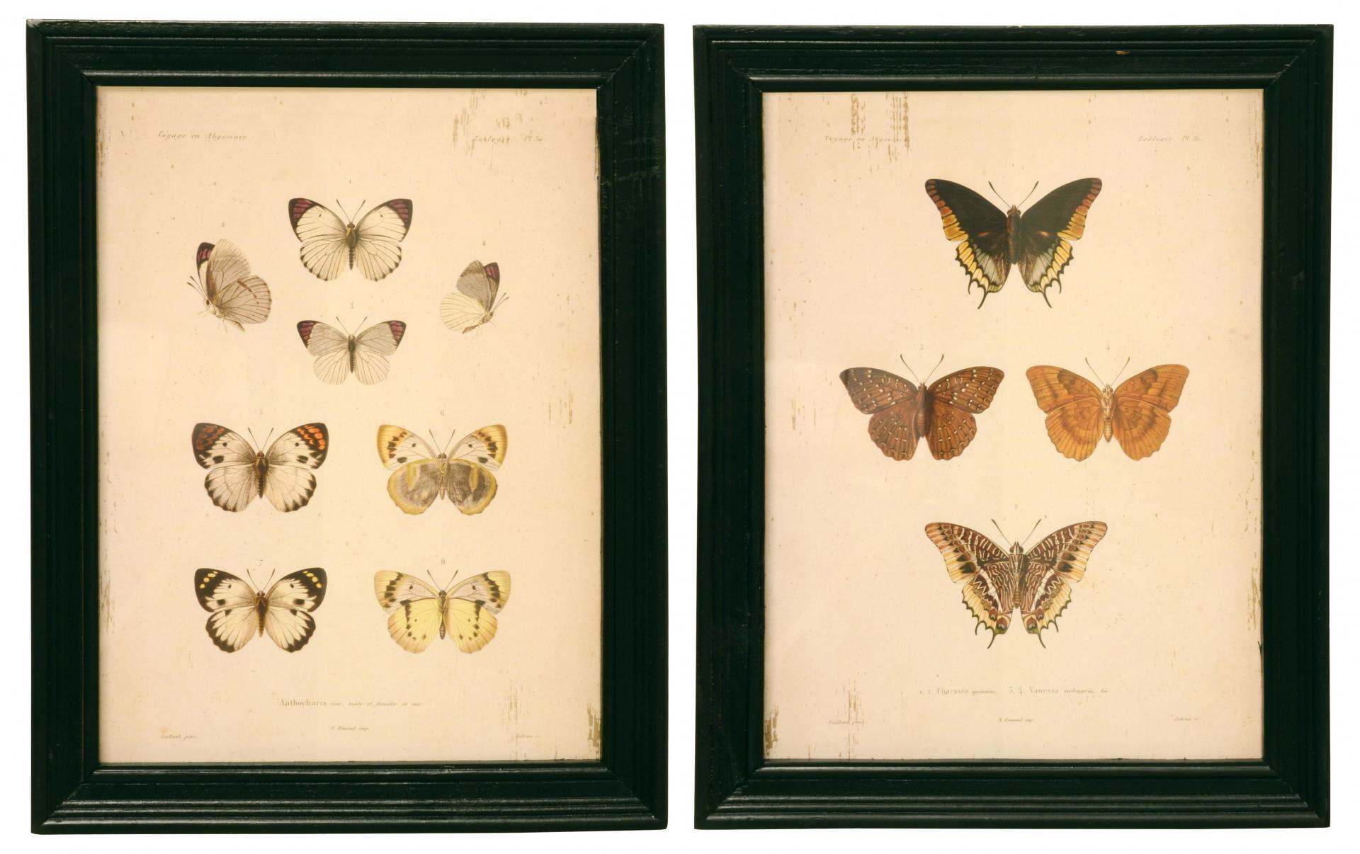 obrázek motýl