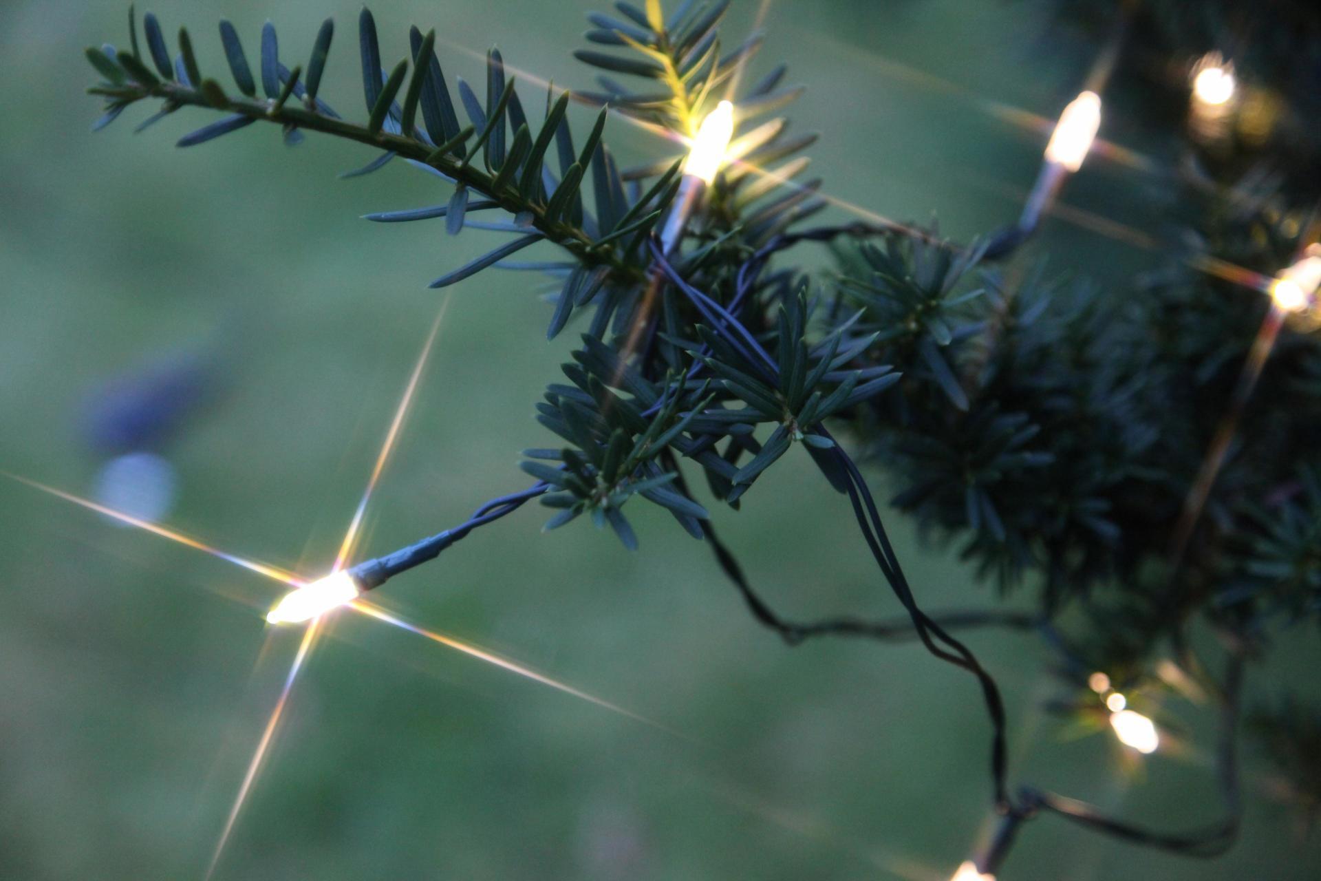 STAR TRADING Venkovní světelný LED řetěz - 40 žároviček, zelená barva, plast