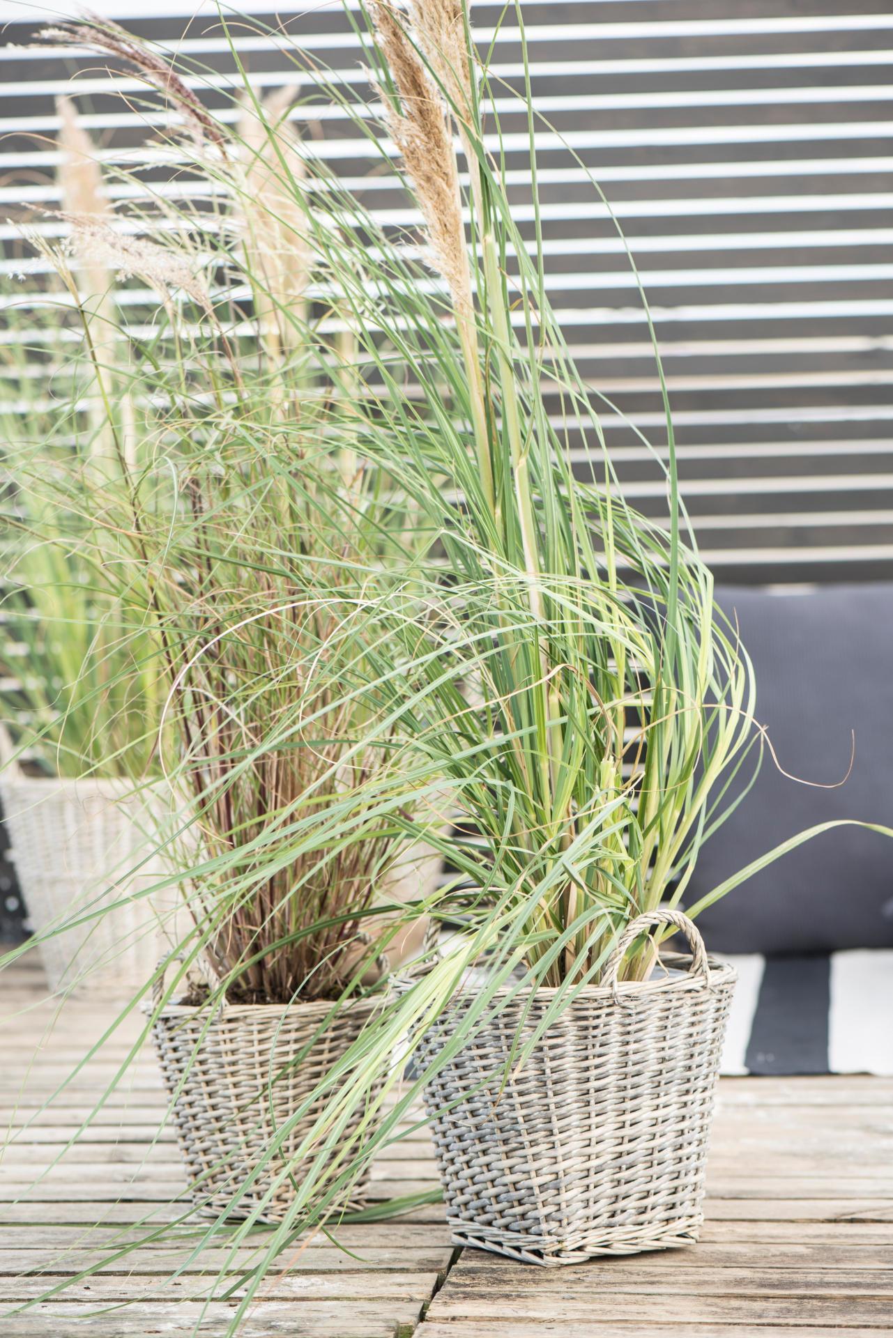 IB LAURSEN Proutěný obal na květiny Conical Menší, přírodní barva, proutí 20cmx20cm