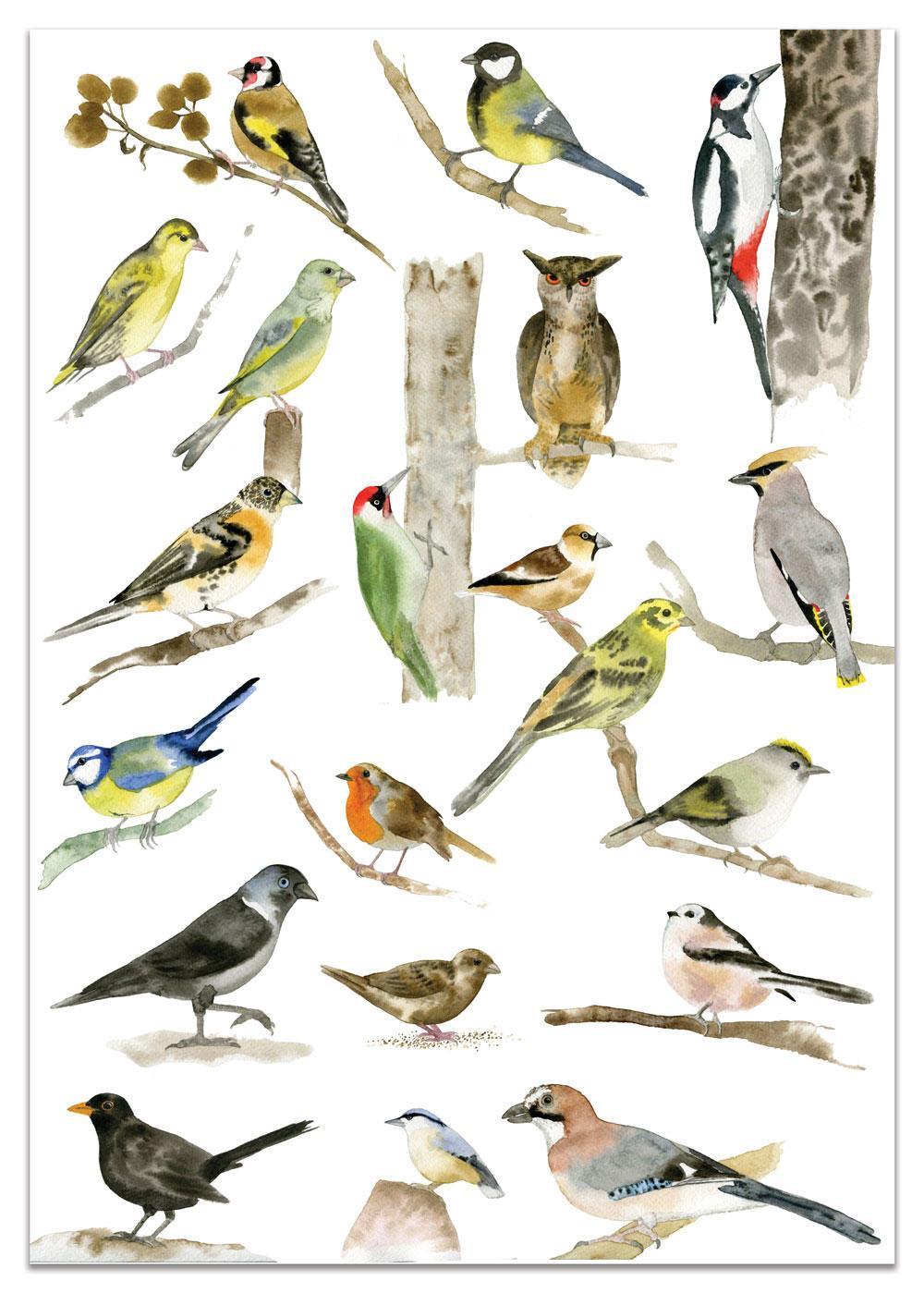 MANKAI Paper Plakát s ptáčky A3 Birds, multi barva, papír