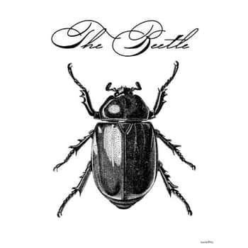 Vanilla Fly / Obrázek The beetle 30x40 cm