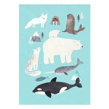 Plakát Artic animals 50 x 70 cm