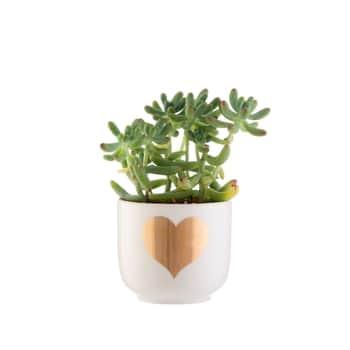 Mini obal na kvetiny Gold Heart
