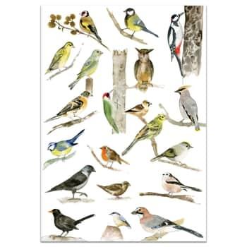 Plagát svtáčikmi A3 Birds