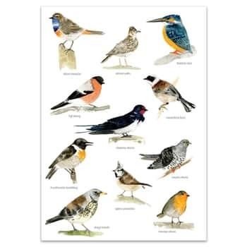 Plagát svtáčikmi A4 Bird Songs