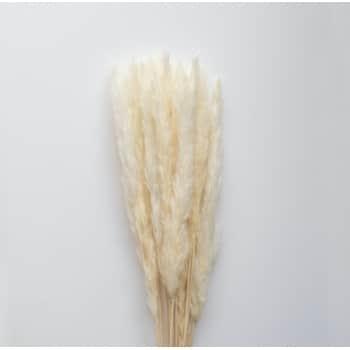 Dekorativní sušené květy Pampas White 200g
