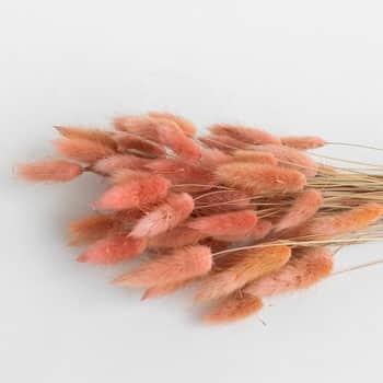 Dekorativní sušené květy Lagurus Rouge 200g