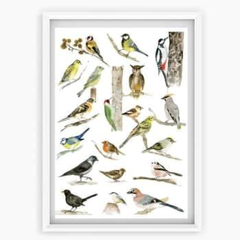 Plakát Ptáčci znašich krmítek A4