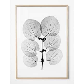 Autorský plakát Katsura 70x100 cm